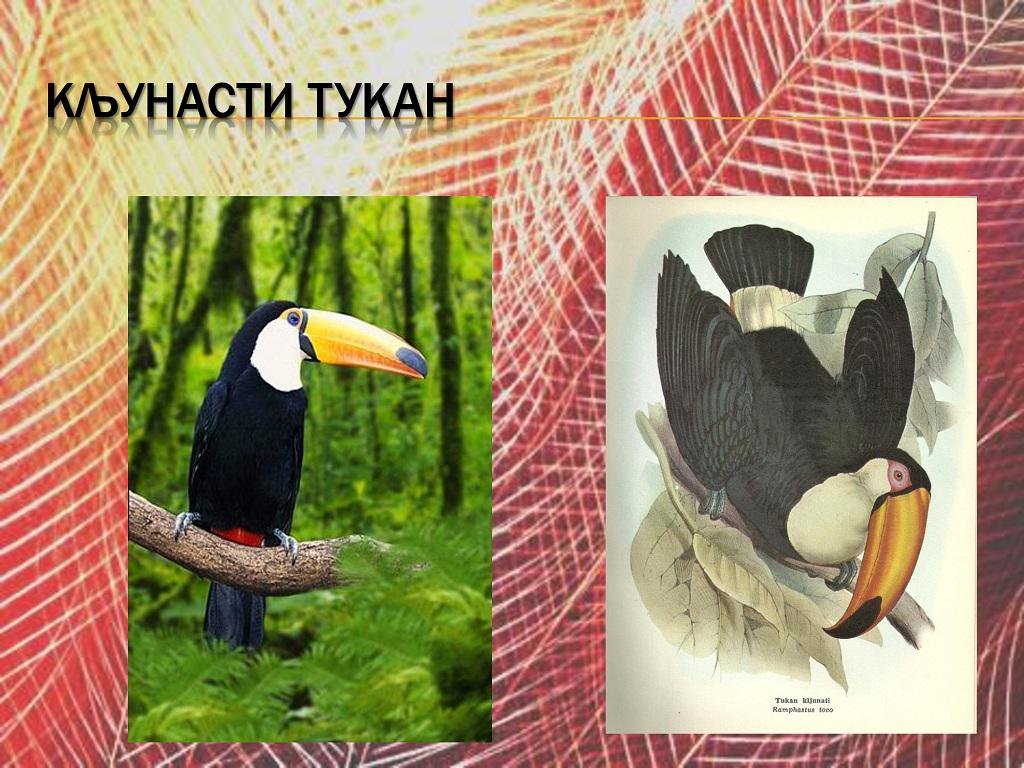 ptice (11)