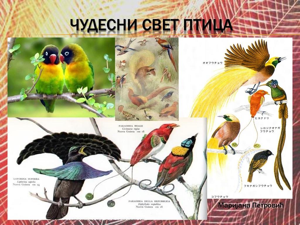 ptice (2)