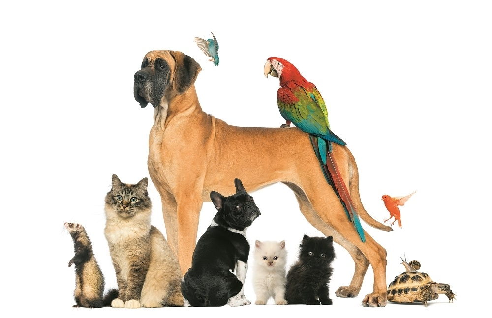 stock-photo-group-of-pets-dog-cat-bird-reptile-rabbit-isolated-on-white-134792705_1000x0