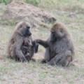 Klub međunarodnog prijateljstva – Safari kroz Keniju