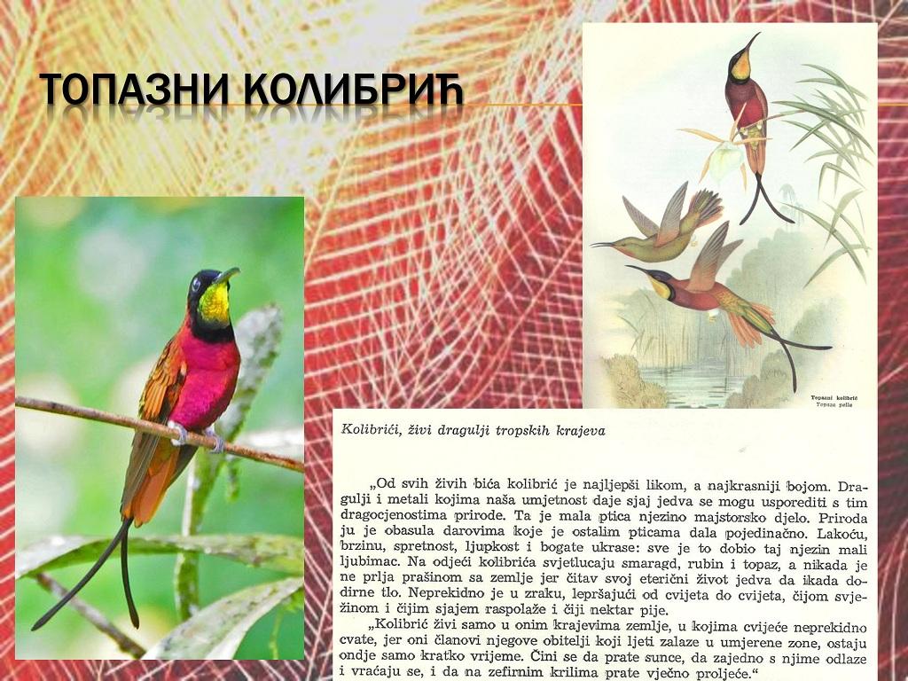 ptice (16)