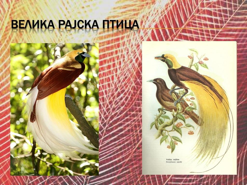 ptice (23)