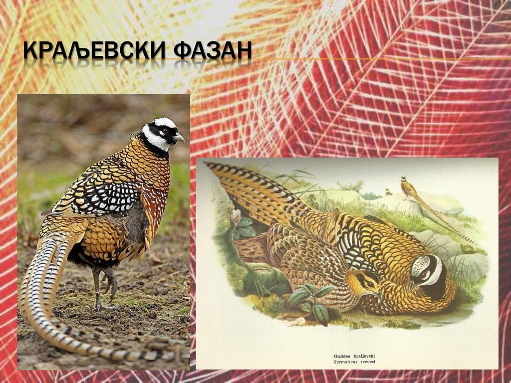 ptice (38)