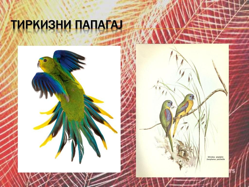 ptice (9)